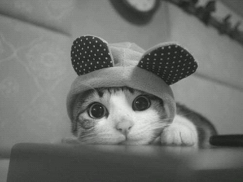[ Divers ] Les petits chats.