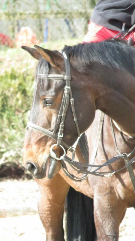 Tu as le saut d'un champion de sauts d'obstacles,  Les allures d'un cheval de dressage, La vitesse d'un cheval de courses, La vie d'un cheval de club, Mais l'âme d'un cheval de coeur.