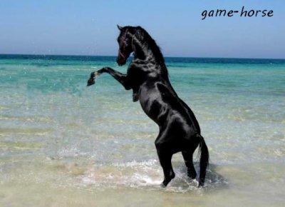 Bienvenue sur game-horse.