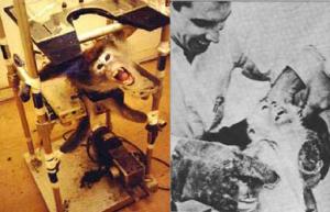 Vivisection et expérimentation animale
