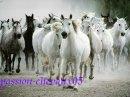 Photo de passion-chevaux05