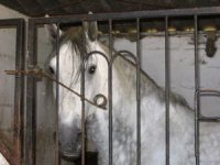 images du poney club
