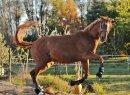 Photo de poney-club-de-charlas