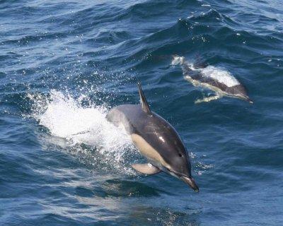 Quelques espèces de dauphins
