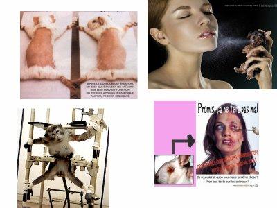 Test sur les animaux