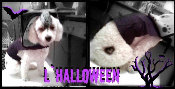 Joyeuse Halloween =D =D (L)