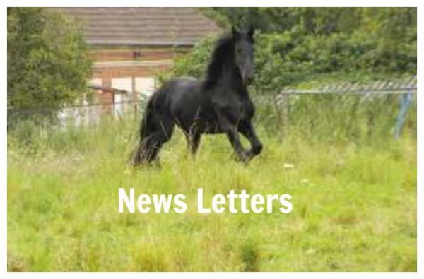 ◄►  News Letters  ◄►