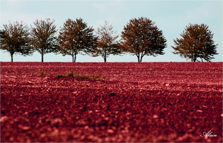 955 - Terre de sang.