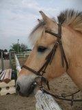 Photo de race-juste-chevaux