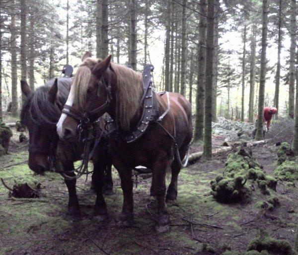 Le debardage a cheval un metier reserver aux hommes? hum...? Pas si sur!! =P