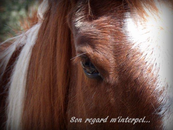Scorpio, Mon amour, mon bonheur...