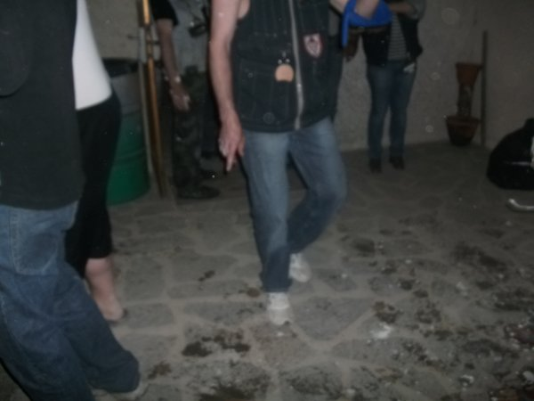 Les pélicans 2011