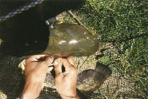 je viens de retrouver quelque photos d'une jounée de pêche
