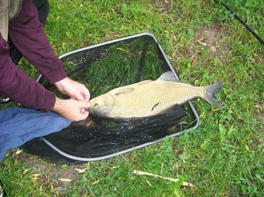 matinée de pêche avec jean-luc , que du beau poissons