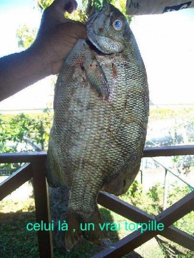 petits souvenirs de pêche sur l'île de la Réunion