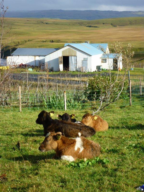 Ya du soleil et des Moutons!