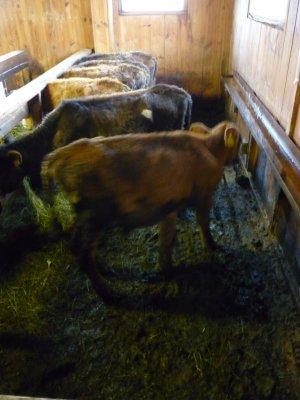 Les drôles d'aventures de Bougnette à la ferme !