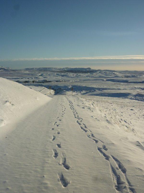 Mon bel Islandais sous la neige P1