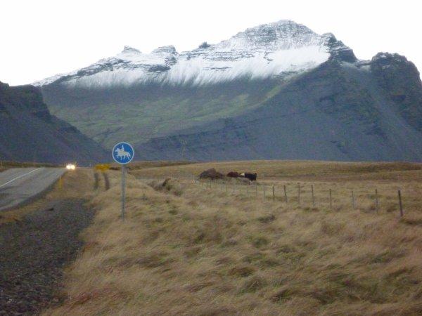 Je sais pourquoi les vaches n'ont pas de cornes ici !!