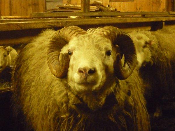 Dernier jour à la ferme... Snifff!!!