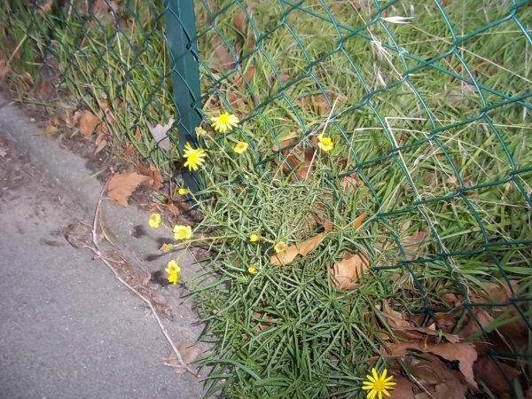 Flores amarillas ...