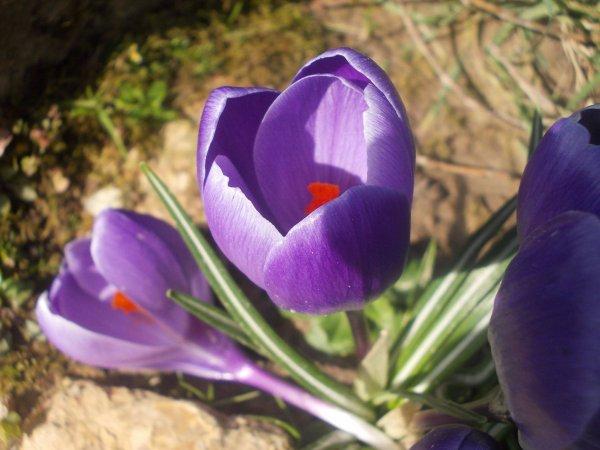 fleures
