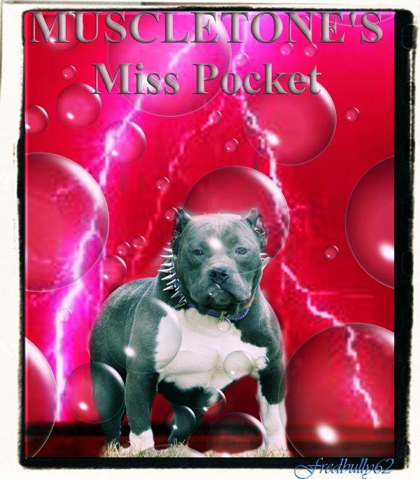 MUSCLETONE'S Miss Pocket