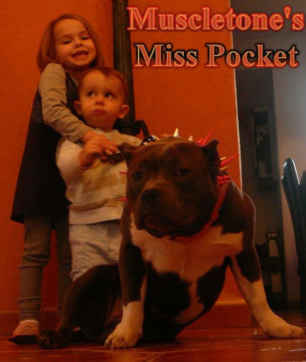 Muscletone's Miss Pocket.