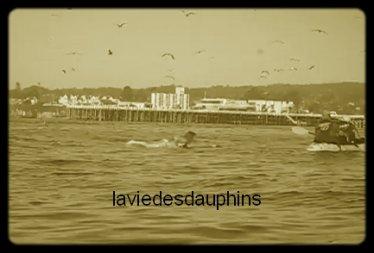 Une surfeuse passe très près du fond du gosier d'une baleine à bosse. Cette surfeuse qui se reposait tranquillement sur sa planche de surf ne s'attendait pas à l'apparition de deux baleines à bosse qui surgissent hors de l'eau pour gober un banc de poissons à quelques mètres d'elle à Santa Cruz en Californie. De nombreux oiseaux profitent de l'occasion pour ingurgiter les poissons encore en surface après le départ des baleines à bosses.