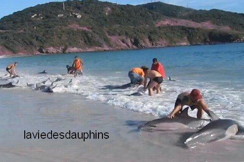 Une trentaine de dauphins sauvés par des vacanciers