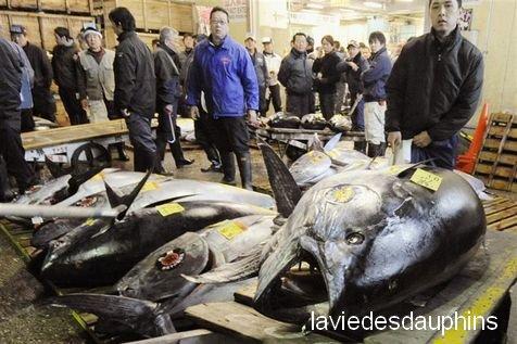 Greenpeace proclame l'urgence sur tous les thons