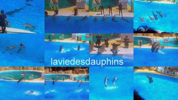 Spectacle des dauphins (l) à Antibes
