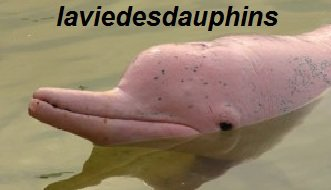 Les dauphins blancs de Chine survivent malgré les inquiétudes liées à la pollution