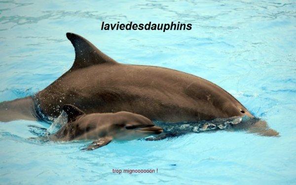 Baleos, dernier-né des dauphins du Parc Astérix