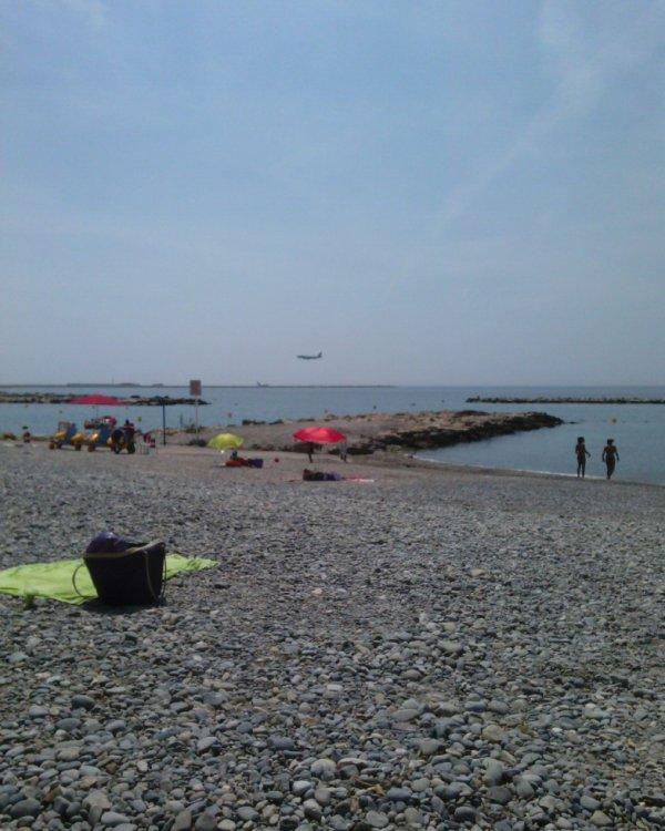 sur la plage abandonnée coquillages et crustacés Saint-Laurent-du-Var