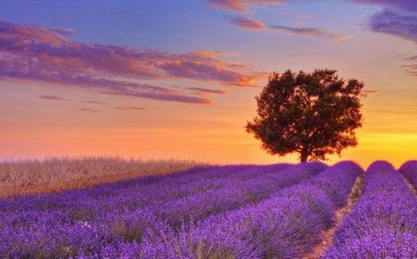 Provence toi qui fais chante tout les cigale de mon c½ur époustouflé par couleur et le parfum de ta lavande jais un instinct oublié les malheur du monde est le mâle que perpétuel a jamais de l'homme sur son passage