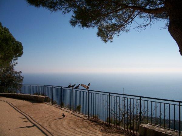 quelle  belle journée aujourd'hui en ce jour 18/02/2015 sur les auteur de Nice le soleil et au rendez vous magnifique paysage que la mer méditerranée et la garrigue des montagne niçoise et le grand Bleu qui présente a vous   merveilleux que Èze village perché comme un monastère  magnifique paysage de sommé en neige du cote FRANCE ET ITALIEN