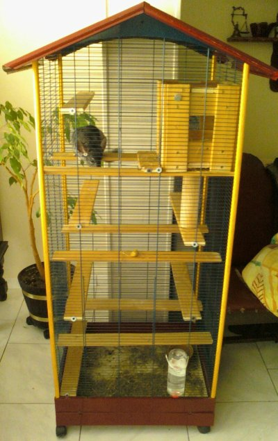 Cage Pour Chinchilla Faite Maison | Ventana Blog