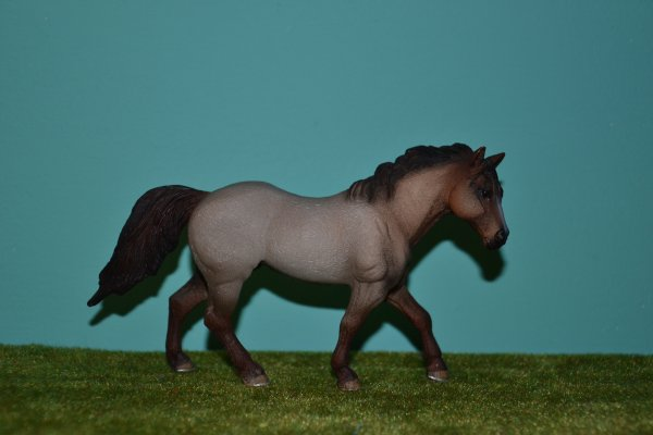 Quarter Horses