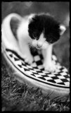 Photo de chlOse-lOve-my-friiends