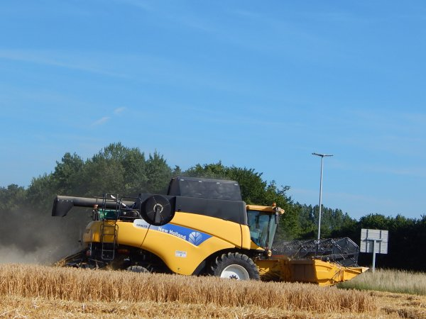 Moisson d'escourgeon - Chantier N°1