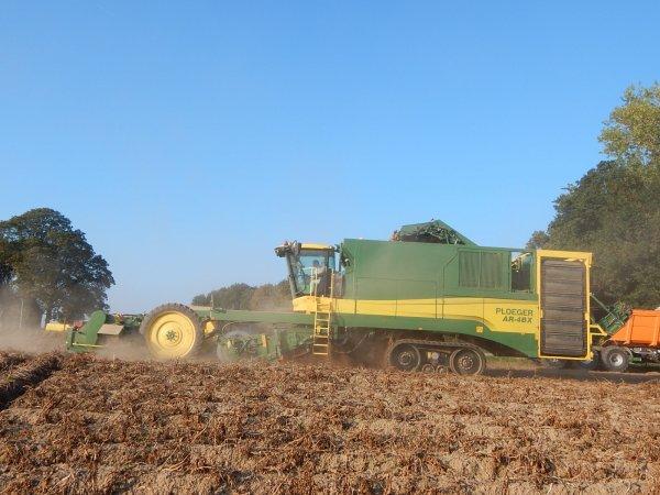 Arrachage de pommes de terre - Chantier N°7