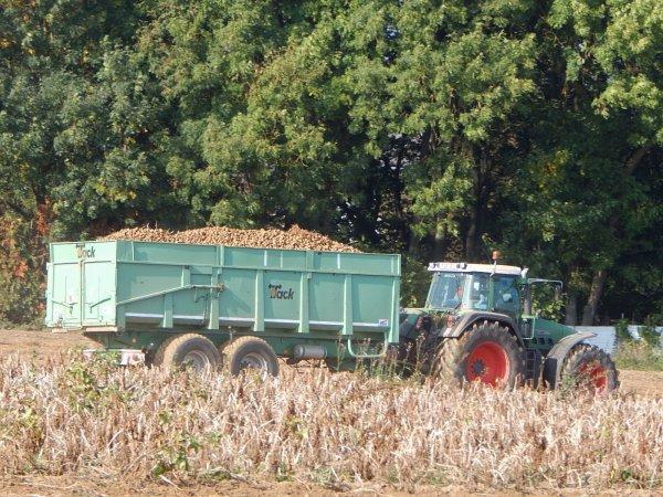 Arrachage de pommes de terre - Chantier N°8