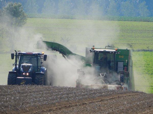 Arrachage de pommes de terre - Chantier N°9