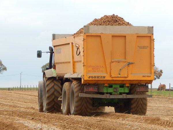 Arrachage de pommes de terre - Chantier N°15