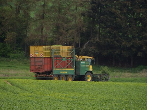 Récolte d'épinards