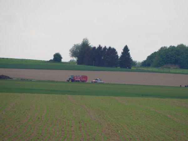 Plantation de pommes de terre - Chantier N°6