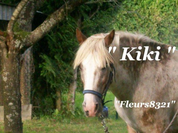 Je vous présente KIKI  ( double poney que mes petites filles ont  passer de bon moment avec  ).