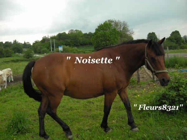 Je vous présente Noisette  ( maman de Mydianne )