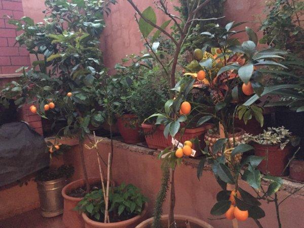 mes kumquat en ce mois de janvier